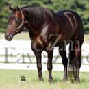 famous quarter horse stallion photo